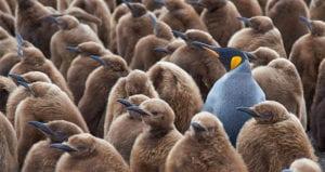 personalization birds